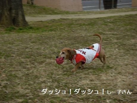 2日散歩.jpg