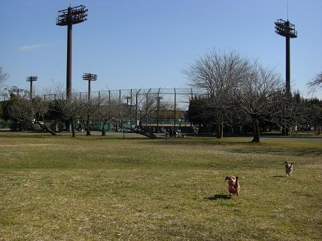 2月19日散歩.jpg