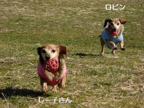 2月19日散歩3.jpg