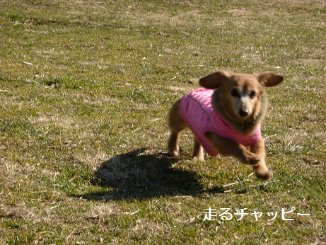 2月19日散歩4.jpg