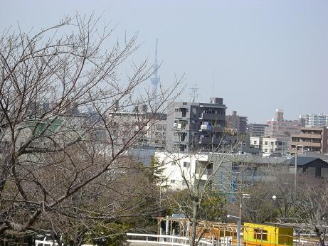3月20日散歩.jpg