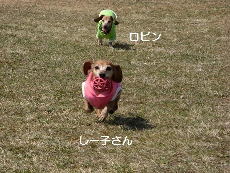 3月20日散歩2.jpg
