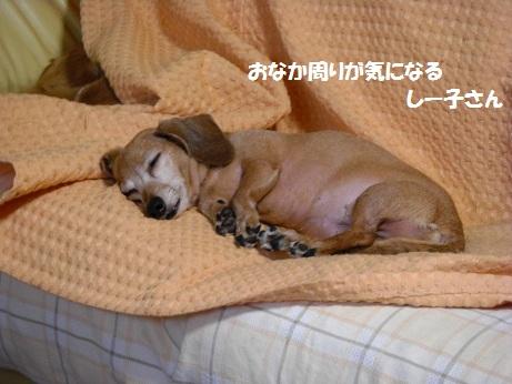 お休み中1.jpg