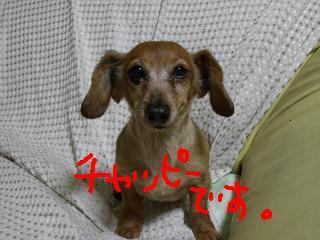 チャッピー正面.JPG