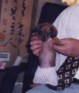 パピーしー子.JPG