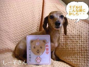 ワンお守り2.JPG