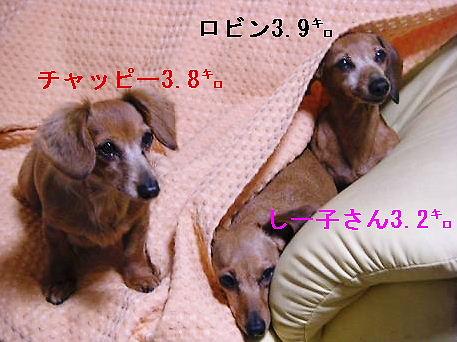 三匹1.jpg