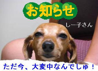 冷房3.JPG