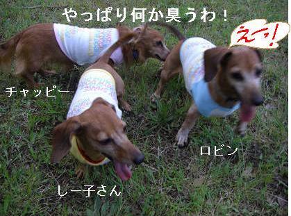 夕方散歩5.JPG