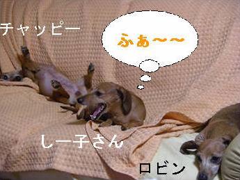 姉妹1.JPG