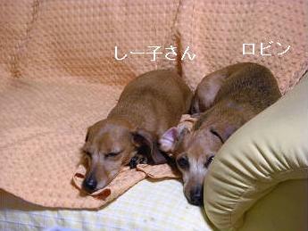 寝てる3.JPG