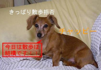 日曜日0.JPG