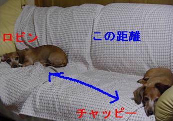 本日2.JPG