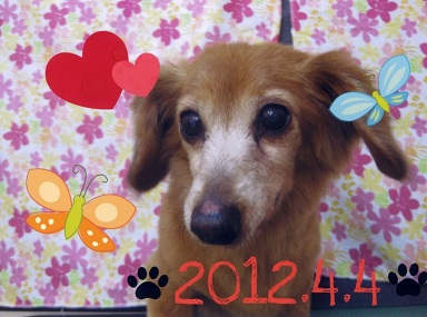 2012ちゃっぴー1.jpg