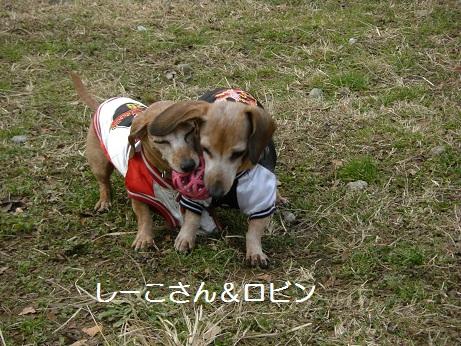 2日散歩2.jpg