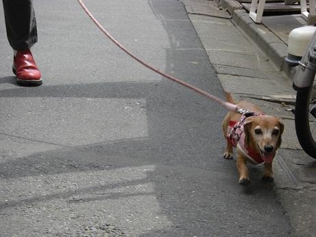 6月10日散歩1.jpg