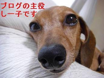 しーこ.JPG