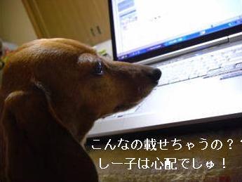 しー子さん1.JPG