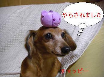 ノセノセ.JPG