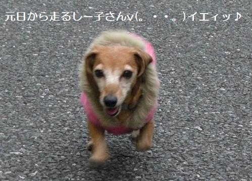 元日散歩1.jpg